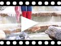 Video from Botas de Agua Mujer Mini Glow